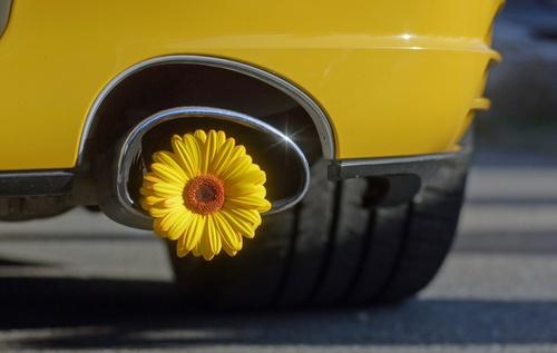 Auto mit Blume im Auspuff